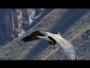 6 оркестр Джейма Ласта (James Last) Полёт орла - El Condor Pasa (комп. Даниэль Роблес)