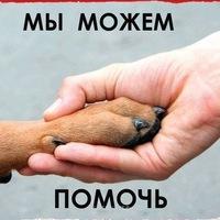 Картинки по запросу помощь животным