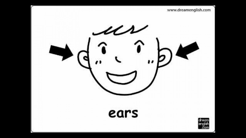 Body Parts: Let's Practice Kids English