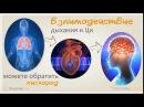 Живите с Ци (видео-урок цигун)