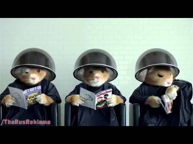 Реклама Киа Соул 2014 - Полное Преображение (Хомяки)