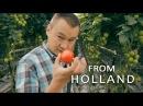 #102 Профессиональная гидропоника в Голландии. Теплица с томатами (4-я серия).