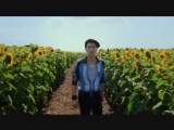 Paul Cantelon Sunflowers (Everything is Illuminated)