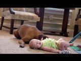 Собаки и Дети (Подборка для поднятия настроения)