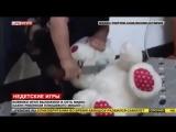 Малыш из ИГИЛ, подражая палачам, обезглавил плюшевого мишку