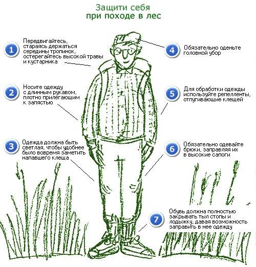 Профилактика, признаки и симптомы укуса энцефалитного клеща, первая помощь
