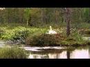 Дикая природа Скандинавии 3 Швеция Sweden 1080p