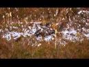 Не дикая природа Скандинавии 2 Норвегия Norway 1080p