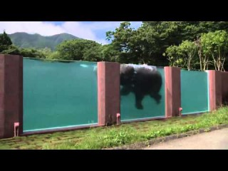 Amazing Video    First Elephants Swimming Pool    Fuji Safari Park    Japan