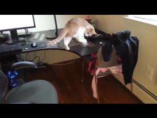 Как отучить кота ходить по столу | прикол, смешное, ржачное, угарное, видео, 2015, улыбнуло, лол, лайфхак