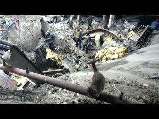 Поиск тел погибших Киборгов в аэропорту Донецка