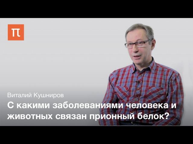 Общие свойства прионов - Виталий Кушниров » Freewka.com - Смотреть онлайн в хорощем качестве