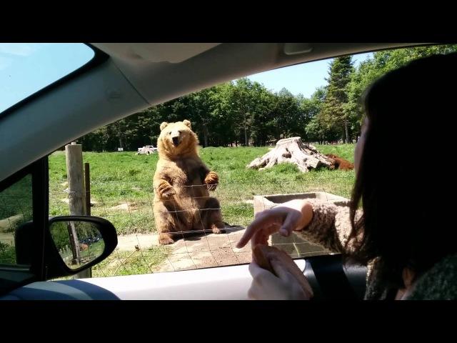 Awesome catch by the bear Удивительный улов медведя