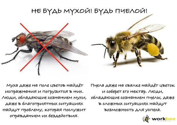 гребёнки, садятся ли пчелы на гавно разработали разноуровневые дифференцированные