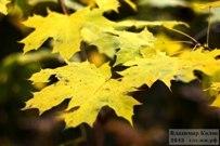 13 октября 2013 - Осень в ягодинском лесу Тольятти