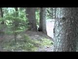 Чудо карпатське - бурий ведмедик