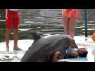 Дельфины трахаются видео фото 709-916