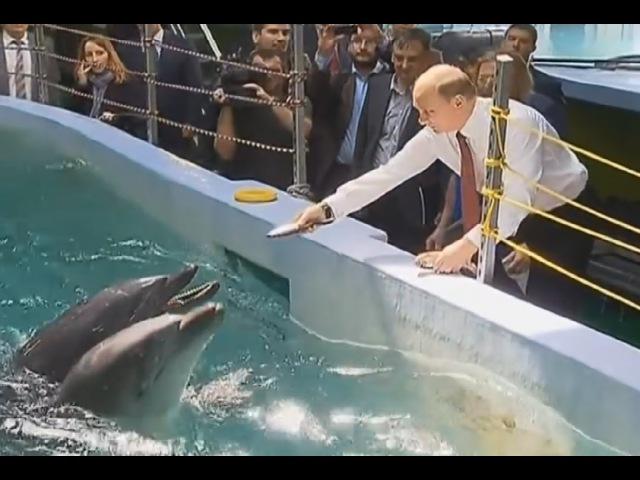 Отлов Косаток в России, Темные Тайны Вокруг Дельфинов.