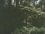 Albrecht La'Brooy - The Sherbrooke Analogue Attic Recordings AAR001