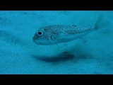 Рыбка создает нечто необыкновенное