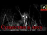 Истории на ночь: Существо в лесу (От Носферату)