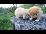 котята, смешные котята, веселые кошки, прикол, сбоник приколов, смешной кот, ghbrjks 2014