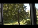 Дицебеллы газонокосилки взрывают мозг