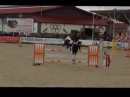 7 years old stallion 169cm jumping 130 135cm at CSIYH* for sale