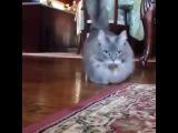 Самый серьезный кот в мире - The most serious cat in the world