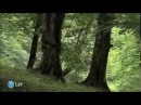 Земля Ноя Армения Документальный фильм, русский перевод
