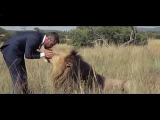 Невероятная история как лев дружит с человеком!