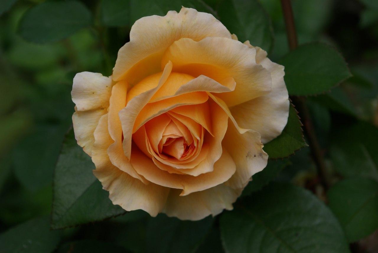 Осенние цветы названия и фото
