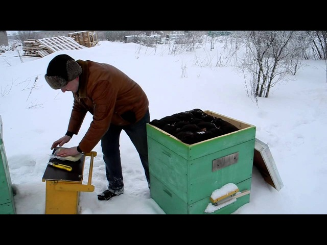 Канди для пчел. Приготовление канди. Подкормка пчел