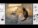 Попугай гопник и котик очень смешное видео