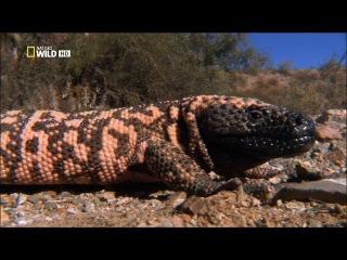 Самые опасные животные - От пустыни до саванны.
