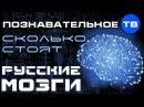 Сколько стоят русские мозги? (Познавательное ТВ, Андрей Помялов)