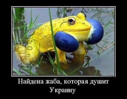 https://pp.vk.me/c625130/v625130402/45aaf/MBjUrshMY7I.jpg