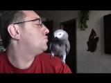 Попугай Григорий жжёт