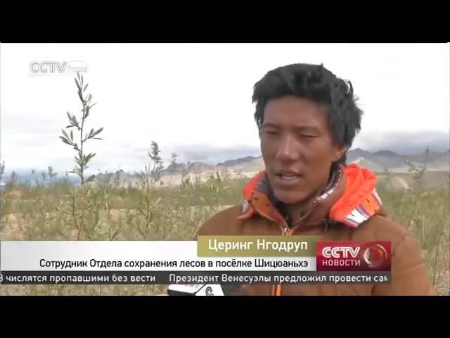 Успехи Тибета Борьба с опустыниванием и засухой
