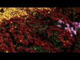 В Никитском ботаническом саду - Тимофей Винковский