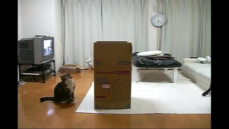 Кот Мару и Коробка