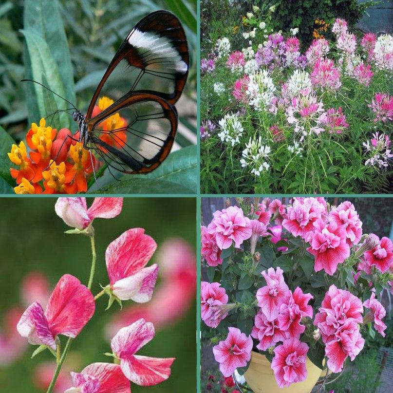 Когда высаживать цветы на постоянное место