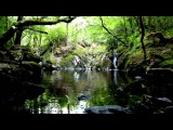 8 Hours of Nature Sounds - Birds Singing - Water Sound Relaxation