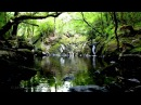 Relaxing 8 Hours of Nature Sounds-Birds Singing-Water Sound Relaxation-Relax Bird Song