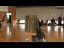第39回全日本抜刀道連盟全国大会・第6回植木杯争奪戦 【居合道・抜刀 36