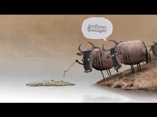 Антилопа гну (2012)