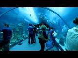 Аквариум в Дубаи Молл