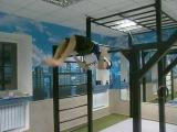 Бронзовый чемпион мира по Street Workout Михаил Греков готовится в 2015 году взять мировое золото