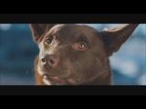 отрывок фильма Рыжий пёс / Red dog - Ты видел Джона?