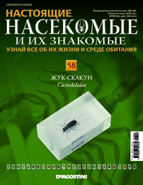 Насекомые №58 - Жук-скакун (Cicindelidae)